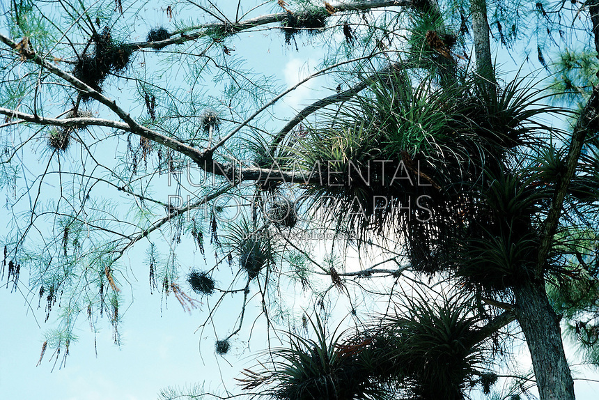 Softwood Trees In Florida ~ D bk fundamental photographs the art of science
