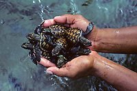 Caring Hands, taken care of our Turtles