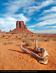 West Mitten Butte and Driftwood, Monument Valley Navajo Tribal Park, Navajo Nation Reservation, Utah/Arizona Border