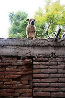 Dog barking in San Miguel de Allende, Guanajuato, Mexico.