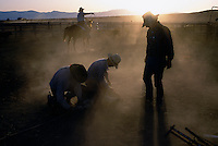 Ranch hands work together to tie a calf down branding the remaining part of their stock which is part of the spring rituals in the west.