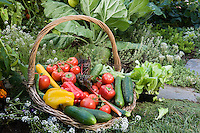 Bountiful harvest basket of organic vegetables in Rosalind Creasy small space edible landscaping garden border; squash, peppers, tomatoes, cherry tomatoes, cucumbers, beans
