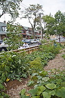 FoodShare's community vegetable garden at 90 Croatia St., Toronto