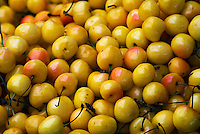 "Farm-fresh produce fresh fruits, Pink & Yellow Cherries (Sweet Cherries) ""Cherry Varieties Bing to Rainier"""