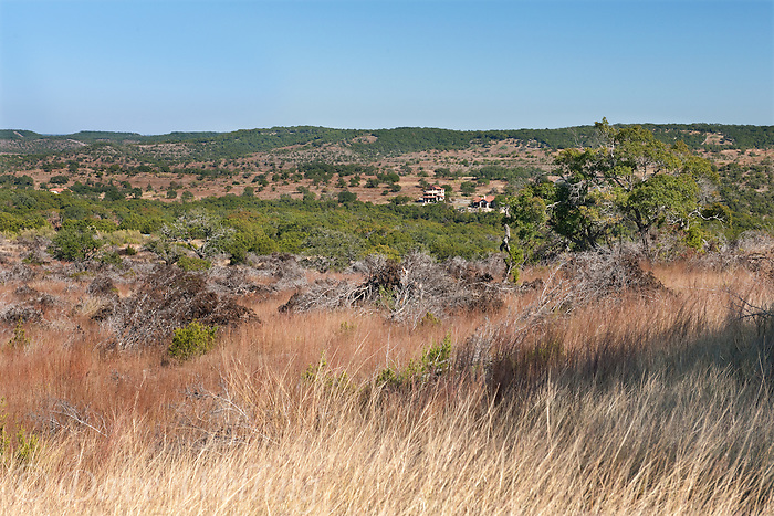 789250131 little bluestem schizachyrium scoparium native grasses (red)  king ranch non-native bluestem (white) bothriochloa ischaemum oaks red cedar removal with neighbor's ranch house in background on los madrones ranch owned by mike and julie murphy hill country texas united states