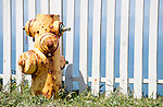 Point Reyes National Seashore, California; a yellow fire hydrant in green grass, against a white picket fence, with blue sky and ocean in the background