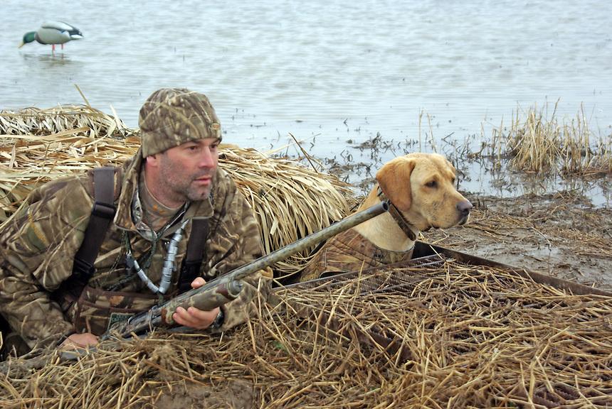 Duck hunter and retriever in pit blind near Stuttgart, Arkansas