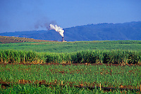 Sugar cane field with sugar mill in background, Mahaulepu, Poipu
