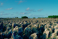Worked out phosphate (fertiliser) fields on the island of Nauru in the South Pacific