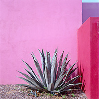 The pink walls of this garden in Mexico are a stunning backdrop for a giant agave plant