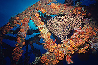 Coral encrusted super structure<br /> Wreck of The WIT Shoal<br /> U.S. Virgin Islands