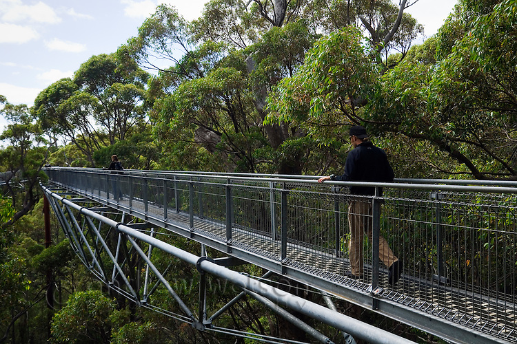 The Tree Top Walk in the Valley of the Giants.  The 600 metre long suspended walkway allows visitors to walk in the canopy of giant tingle trees.  Walpole-Nornalup National Park, Western Australia, AUSTRALIA.