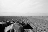 Berivoi De Jus, Transylvania<br /> Romania<br /> April 30, 1992<br /> <br /> Cultivating with bulls