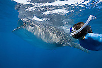 RX2812-D. Whale Shark (Rhincodon typus) swimming just under the surface feeding on plankton while woman (model released) swims alongside the 25 foot long gentle giant. Gulf of Mexico, Mexico, Caribbean Sea.<br /> Photo Copyright &copy; Brandon Cole. All rights reserved worldwide.  www.brandoncole.com