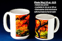 Coffee Mug 15oz White - Have any photo from Chris Bidleman Photography collection on your cup.  Available in 11oz or black or white mug too.<br /> <br /> To order, select your photo from the library, pick the &quot;buy&quot; button, and go to the &quot;products&quot; tab to select your size and color.