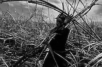 Indigenous people working at Sugarcane Plant. Sugarcane cutters submited to Contemporary slavery. Mato Grosso do Sul State, Brazil.
