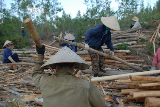 Vietnamese workers remove the bark from freshly cut trees in Hoi An, Vietnam.