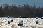 Pocatello, New York - Hay bales are topped with snow in a farm field on Jan. 18, 2014,