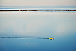 Kayaker cruises across a glassy Dungeness lagoon inside the 5 miles long Dungeness Spit, one of the longest sandbar peninsulas in the world.