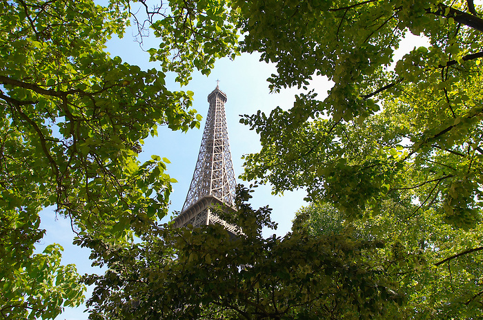 Picture of The Eifel Tower Paris
