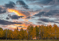Uncompahgre National Forest, CO: Sunset clouds and fall aspen grove
