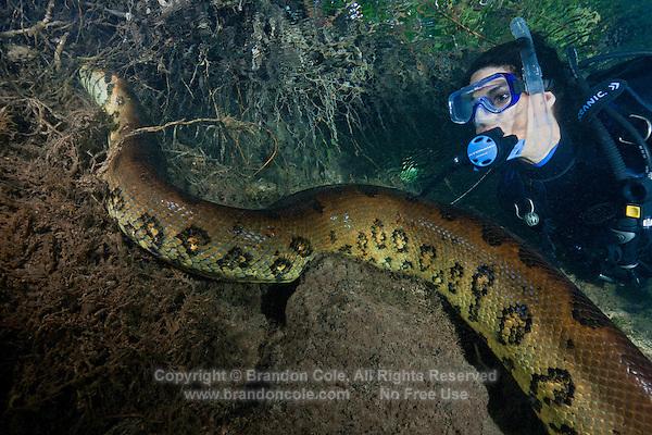 Giant underwater snake - photo#18