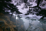 Pine trees cling to cliffs in mist, Huang Shan (Yellow Mountains), Anhui, China.