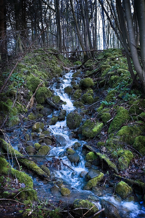 A woodland with a trickling stream over moss covered boulders