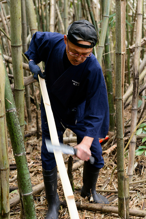 Reimei Yokoyama cutting bamboo for bow making. Yokoyama Reimei Bowmakers, Miyakonojo, Miyazaki Prefecture, Japan, December 23, 2016. A handful of bowyers from the Kyushu city of Miyakonojo make over 90% of all the bows used in traditional Japanese archery. The bows are made from laminated bamboo and haze wood in process that consists of over 200 individual tasks. At over two meters from tip to tip the bows the longest used in the world.