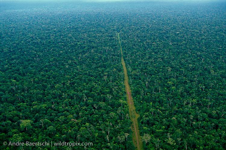 Logging road in lowland tropical rainforest near the Rio Bajo Paragua and Noel Kempff Mercado National Park, Santa Cruz, Bolivia.