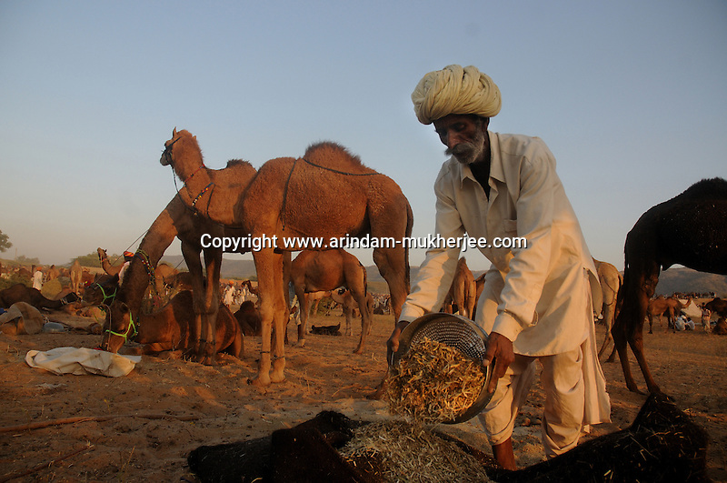 how to get camel dung rs