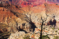A lone dead tree stands against the rugged Grand Canyon.