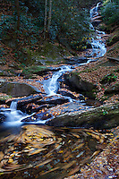 Swirling leaves in an eddy current at the bottom of a falls near Mount Mitchell punctuate the colors of fall.