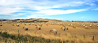 Hay bales, rural Victoria.<br />