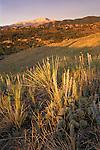 Morning light on prairie and Pike's Peak, Ute Valley Park, Colorado Springs, Colorado
