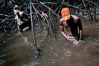 Colombian boys wash the mud off their clothes in the dirty water of the mangrove swamps on the Pacific coast, Colombia, 12 June 2010. Deep in the impenetrable labyrinth of mangrove swamps on the Pacific seashore, hundreds of people struggle everyday, searching and gathering a tiny shellfish called 'piangua'. Wading through sticky mud among the mangrove tree roots, facing the clouds of mosquitos, they pick up mussels hidden deep in mud, no matter of unbearable tropical heat or strong rain. Although the shellfish pickers, mostly Afro-Colombians displaced by the Colombian armed conflict, take a high risk (malaria, poisonous bites,...), their salary is very low and keeps them living in extreme poverty.