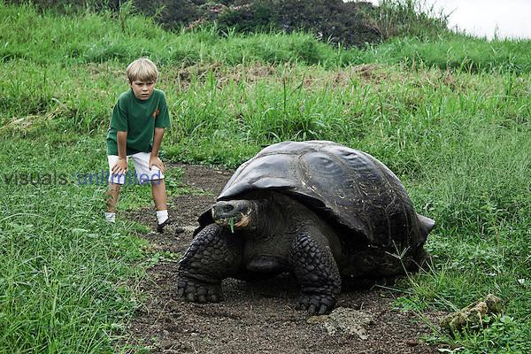 A young boy (MR) observing a Galapagos Giant Tortoise (Geochelone elephantopus) eating in a grassy field on Santa Cruz Island, Galapagos, Ecuador.