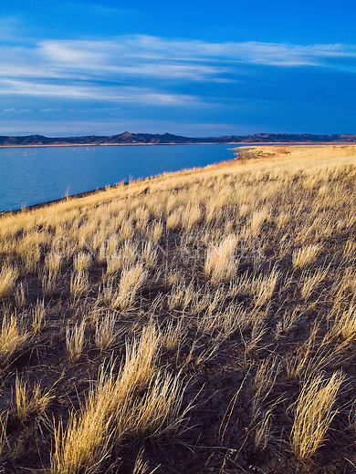 Bunch grasses along the shores of the Missouri River in eastern Montana