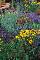 Colorful garden with Rudbeckia black eyed Susan daisies, sage, astrantia, flowering tobacco Nicotiana, bachelor buttons Centaurea cyanus, Heuchera, Coreopsis
