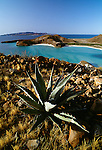Century Plant, Baja California, Sea of Cortez, Mexico