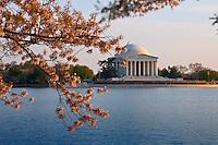 Jefferson Memorial In Washington DC with cherry blossom tree