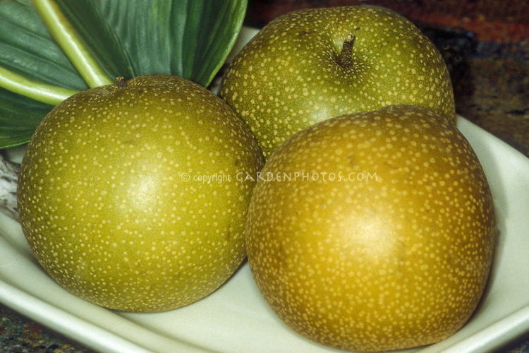 Asian pears 'Hosui' fruit Pyrus