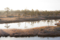 Morning Light and Reflecting Trees in Misty Männikjärve Bog, Fall, Jõgeva County, Estonia
