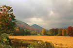 Cornfield, Rochester, Vermont