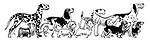 Various breeds of dog standing in line
