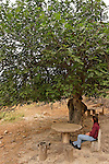 T-111 Fig tree in Ein Marganit