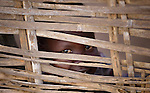 A displaced boy peers through a fence in Agok, a town in the contested Abyei region where tens of thousands of people fled in 2011 after an attack by soldiers and militias from the northern Republic of Sudan on most parts of Abyei. Although the 2005 Comprehensive Peace Agreement called for residents of Abyei--which sits on the border between Sudan and South Sudan--to hold a referendum on whether they wanted to align with the north or the newly independent South Sudan, the government in Khartoum and northern-backed Misseriya nomads, excluded from voting as they only live part of the year in Abyei, blocked the vote and attacked the majority Dinka Ngok population. The African Union has proposed a new peace plan, including a referendum to be held in October 2013, but it has been rejected by the Misseriya and Khartoum.