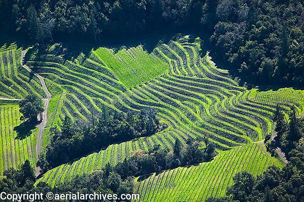 aerial photograph hillside vineyard Napa Valley, California