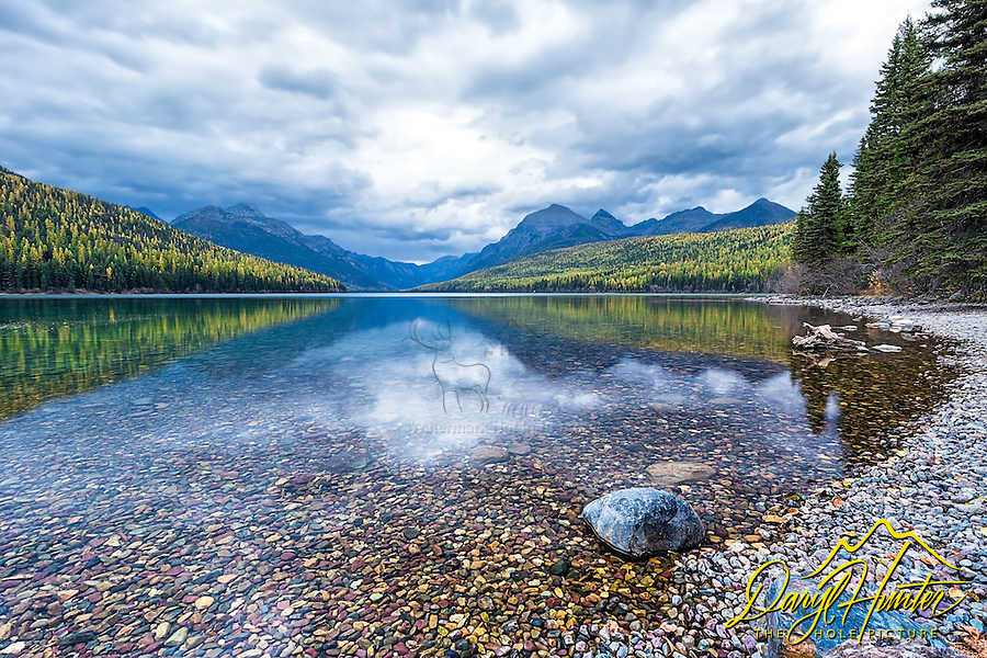 Autumn at Bowman Lake in Glacier National Park. The golden larch trees  and the jagged peaks cast a nice reflection on this amazing lake filled full of colorful pebbles and rocks.