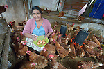 Ruperta Tojil collects eggs in a women's cooperative poultry raising project in Buena Vista Bacchuc, a small Mam-speaking Maya village in Comitancillo, Guatemala. The project is assisted by the Maya Mam Association for Investigation and Development (AMMID).